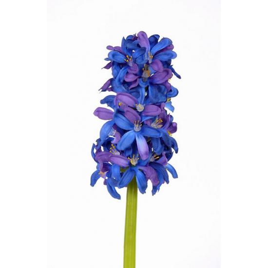 blauwe-hyacinth-30-cm