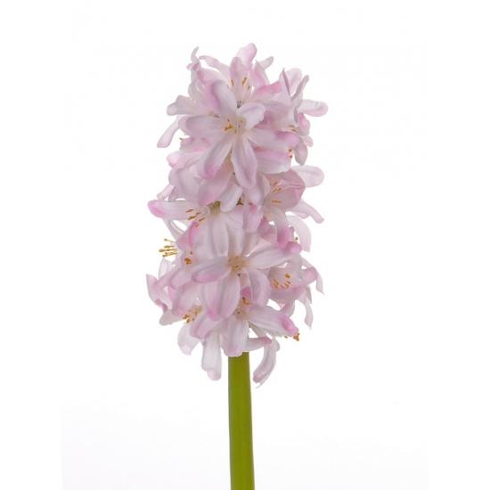 roze-hyacint-30-cm