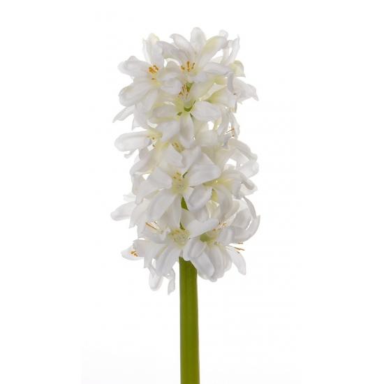 witte-hyacinth-30-cm